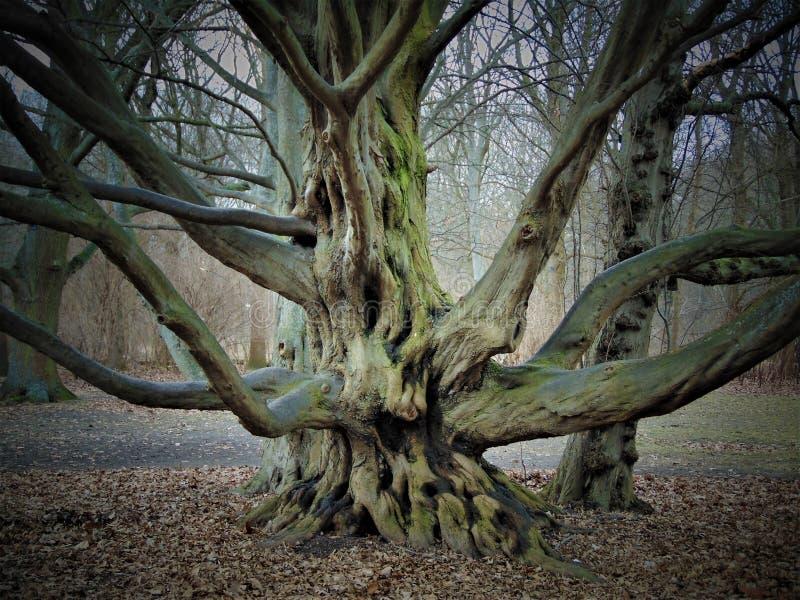 Фото макроса с предпосылкой мартом ландшафта первые весенние дни в парке с декоративными деревьями стоковое фото rf