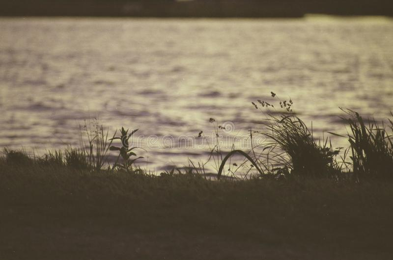 Фото низкого контраста сетноое-аналогов травы рядом с рекой стоковое изображение