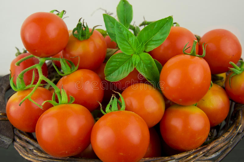 Фото очень свежих томатов представило на белой предпосылке стоковая фотография rf