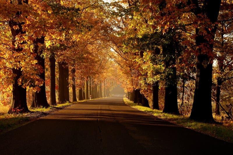 Осень. стоковое фото