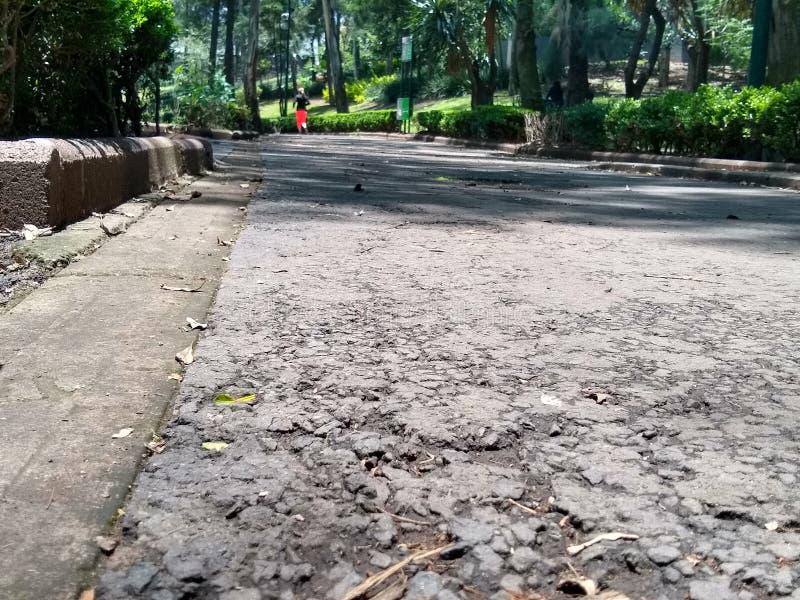 фото принятое снизу в sunken парк Мехико стоковая фотография
