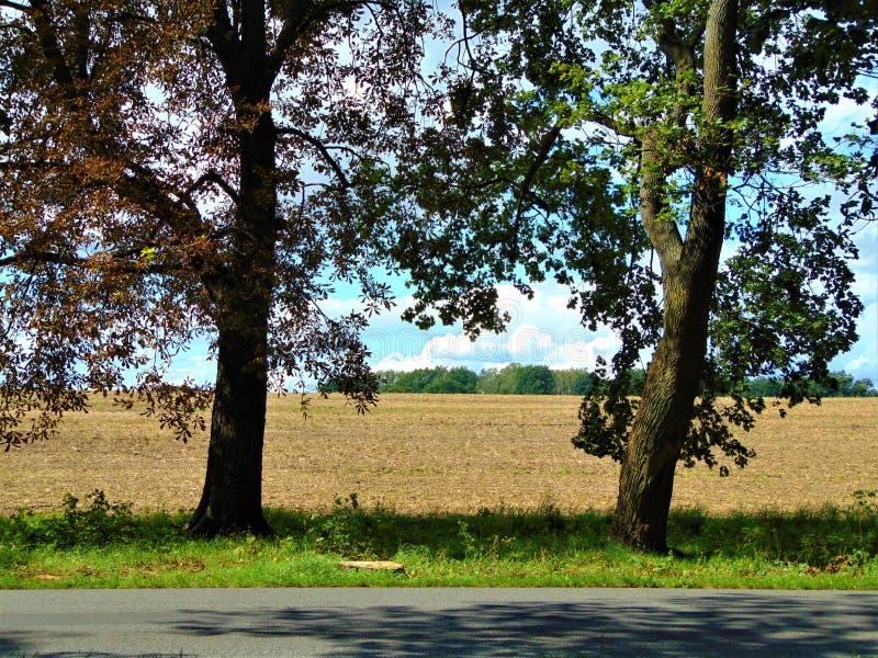 Фото сельского ландшафта с полями и деревьями на летний день стоковое фото