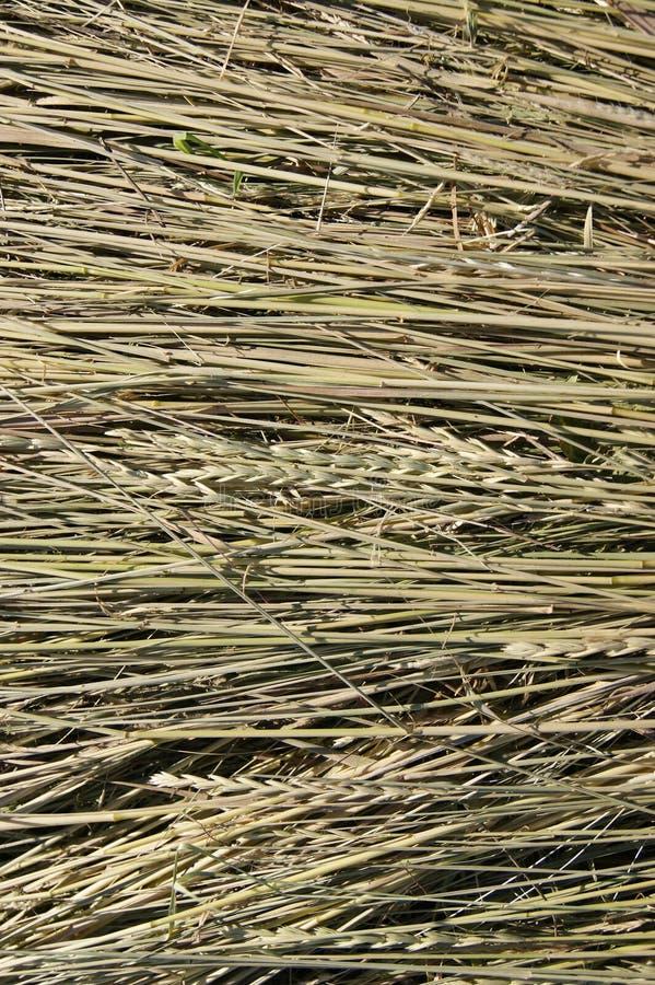 Фото сена, соломы стоковые изображения