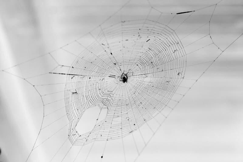 Фото сети паука естественное сетчатое стоковые фото