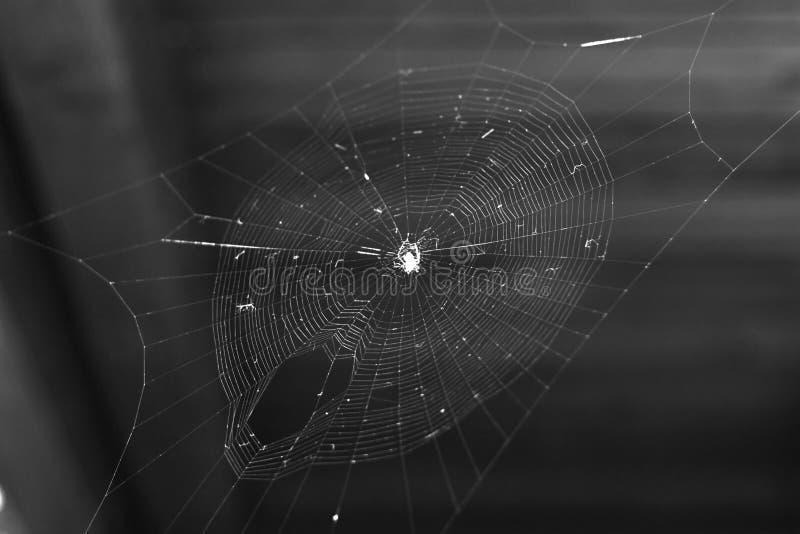 Фото сети паука естественное стоковое фото