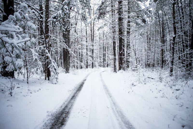 Фото следа покрытого снегом в древесинах стоковое фото