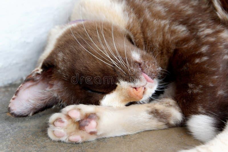 Фото снов кота на поле стоковая фотография