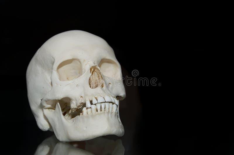 Фото человеческого черепа стоковые фото