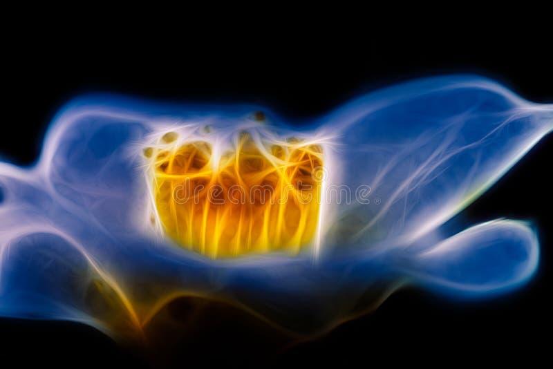 Фракталь голубым цветком стоковое изображение rf