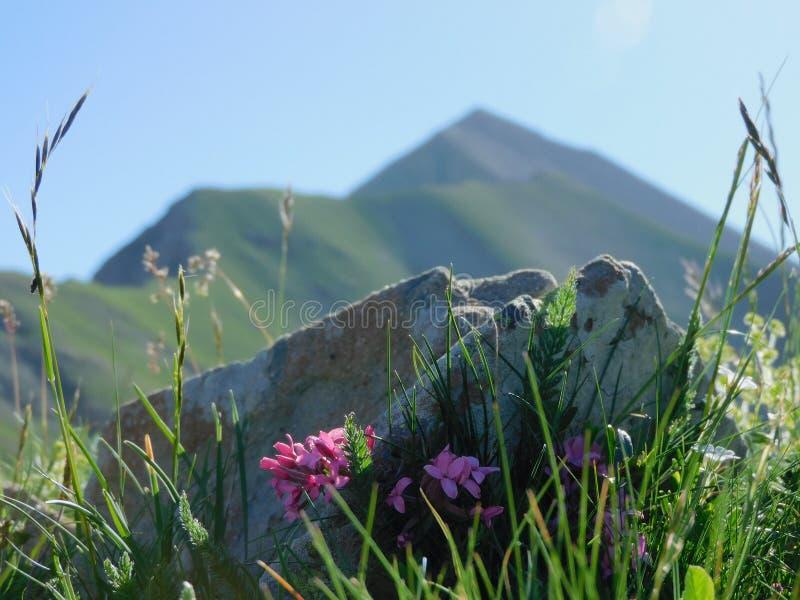 Французская гора стоковая фотография rf