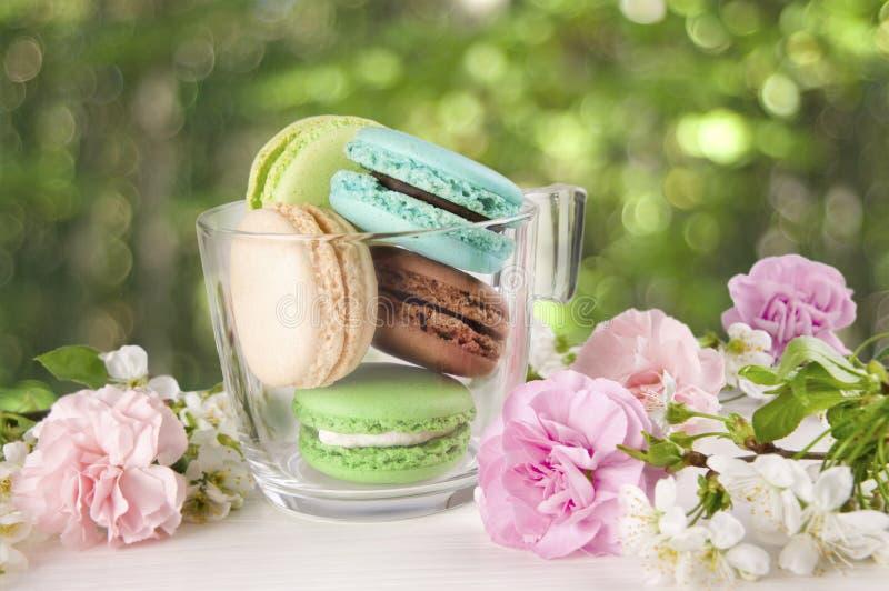 Французские macaroons в чашке Бирюза, шоколад и зеленый macaroon стоковые фото