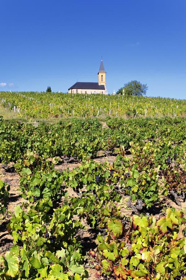 французские vineyads стоковое фото rf