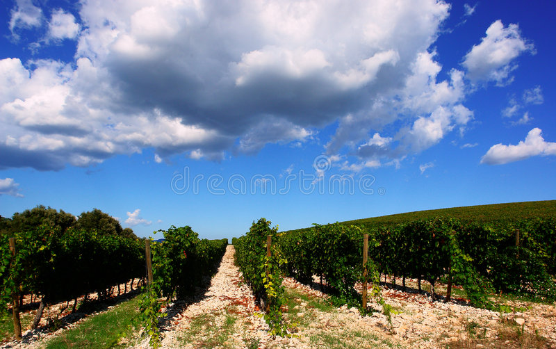 французский сценарный виноградник стоковые изображения rf