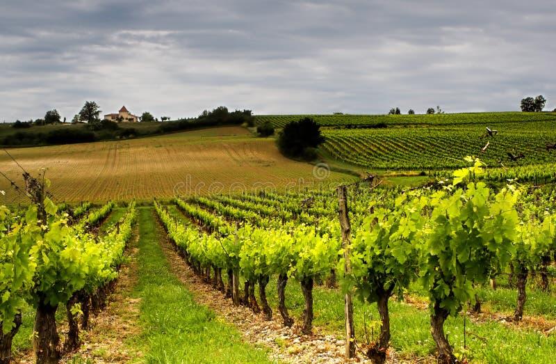 французское вино стоковое изображение rf