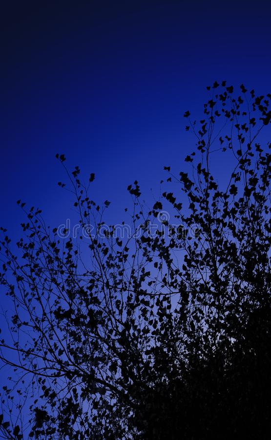 Фронт ветвей и листьев темного ночного неба Космос выведенный для текста стоковое фото