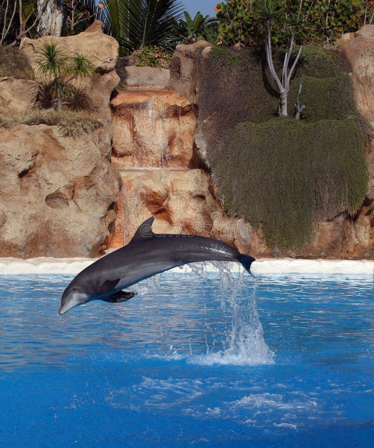фронт дельфина каскада стоковое изображение rf