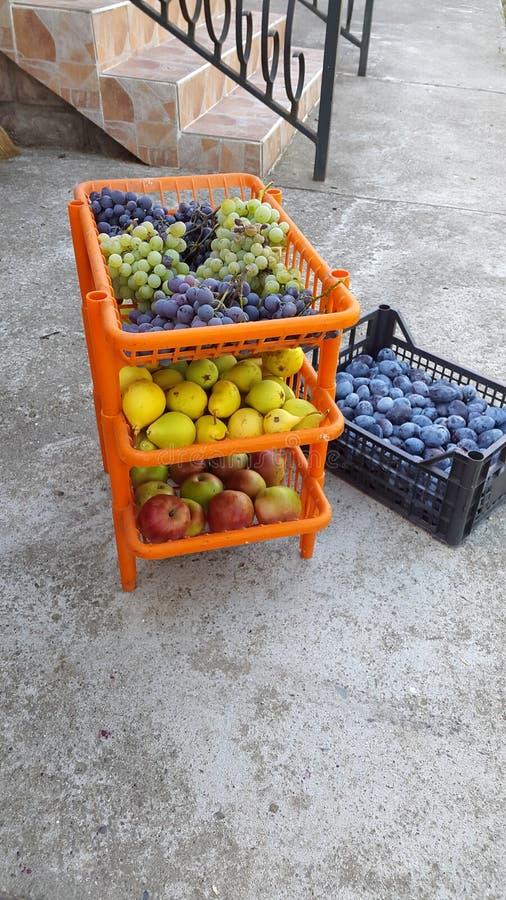 Фрукты и овощи падения стоковая фотография rf