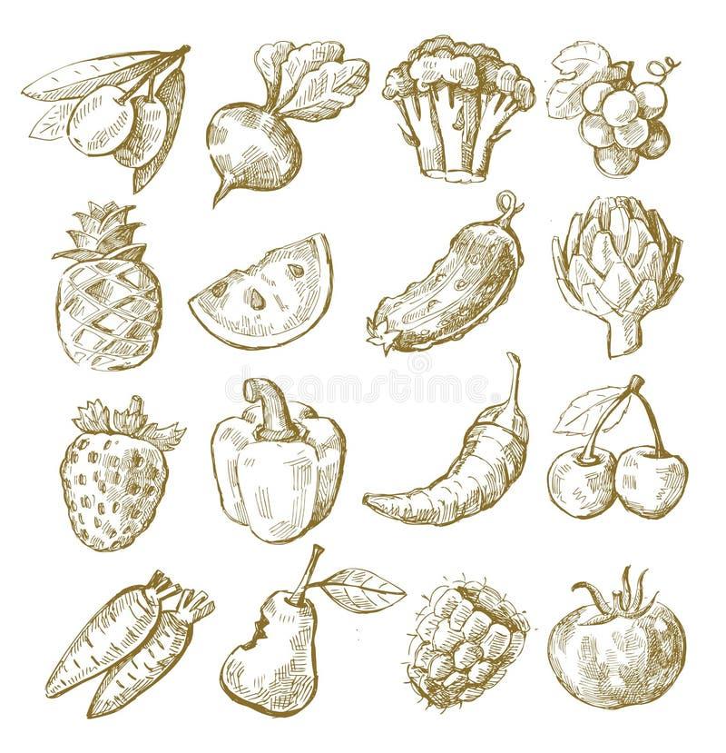 Фрукт и овощ притяжки руки иллюстрация вектора