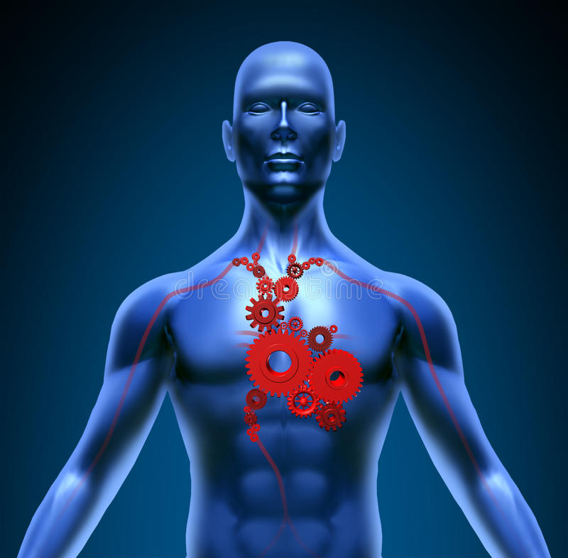 функция зацепляет клапаны символа сердца людские медицинские иллюстрация штока