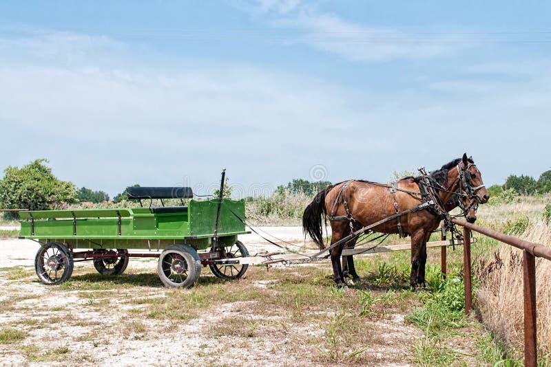 Фура и команда лошадей стоковые изображения