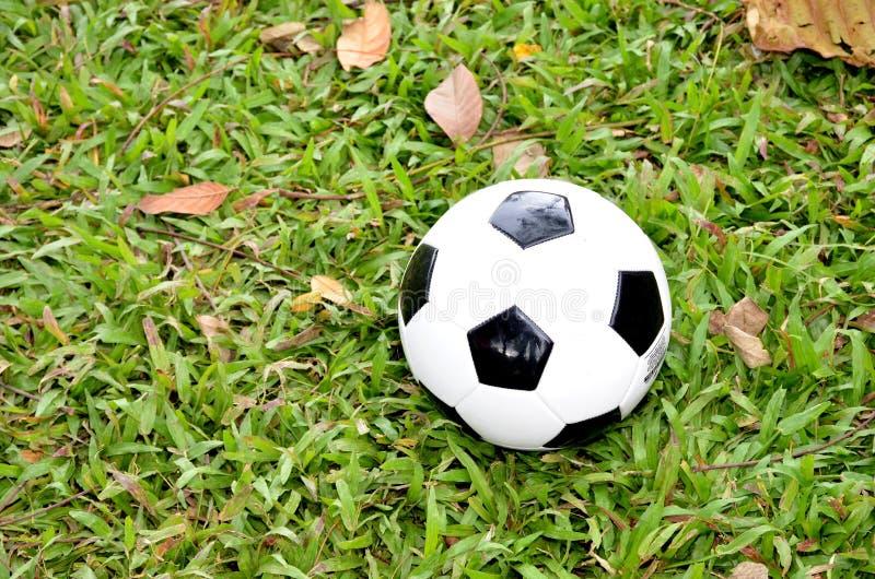 Футбол в траве сосны стоковое изображение
