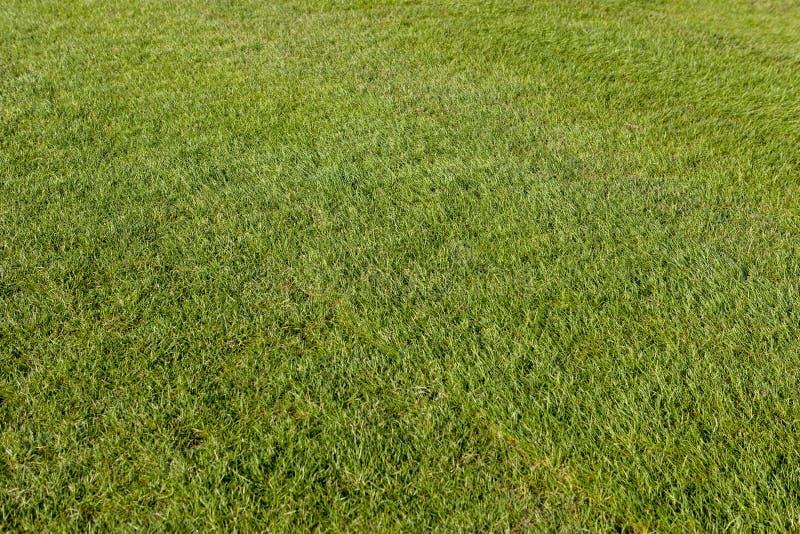 Футбол Лужайка кубка мира 2018 Точно отрежьте траву стоковое фото