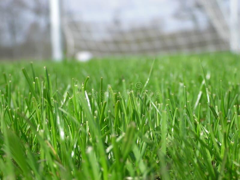 футбол сети зеленого цвета травы стоковые изображения