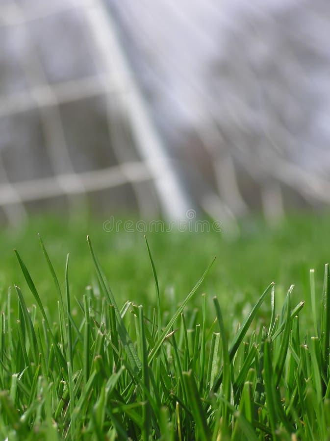 футбол сети зеленого цвета травы стоковое фото