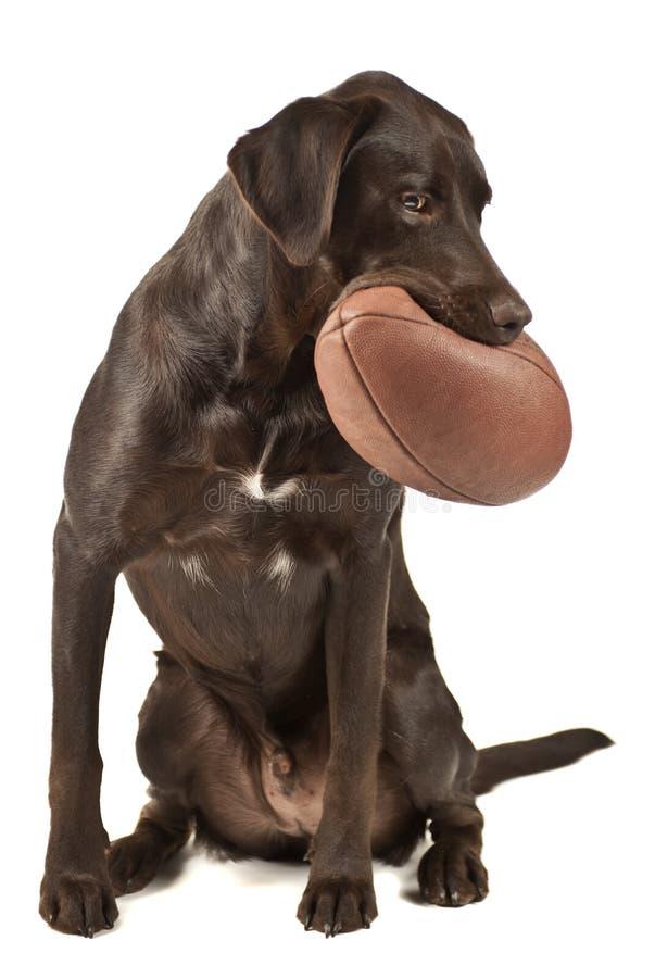 футбол собаки стоковая фотография rf