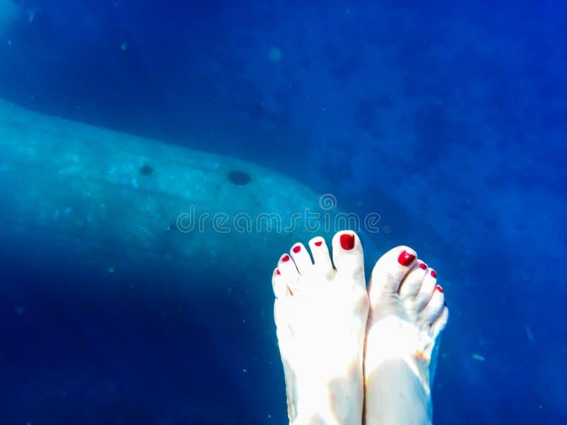 Фюзеляж воздушных судн в воде на глубине и женской ноге стоковые фотографии rf