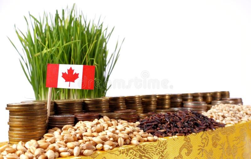 Флаг Канады развевая с стогом монеток денег и кучами пшеницы стоковые фото