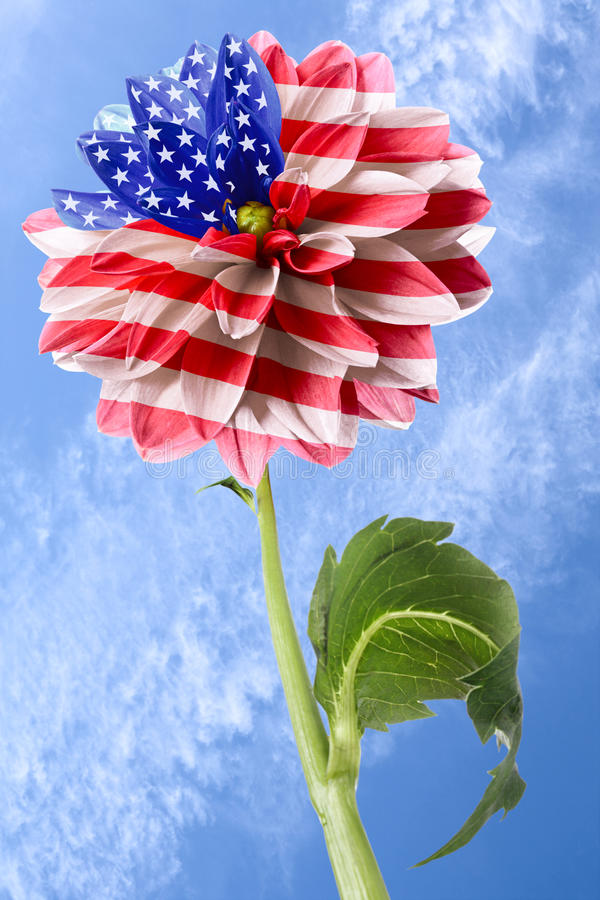 Download флаг США стоковое изображение. изображение насчитывающей эмблема - 40584521