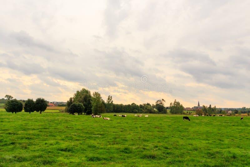 Фламандский ландшафт сельской местности стоковое изображение rf
