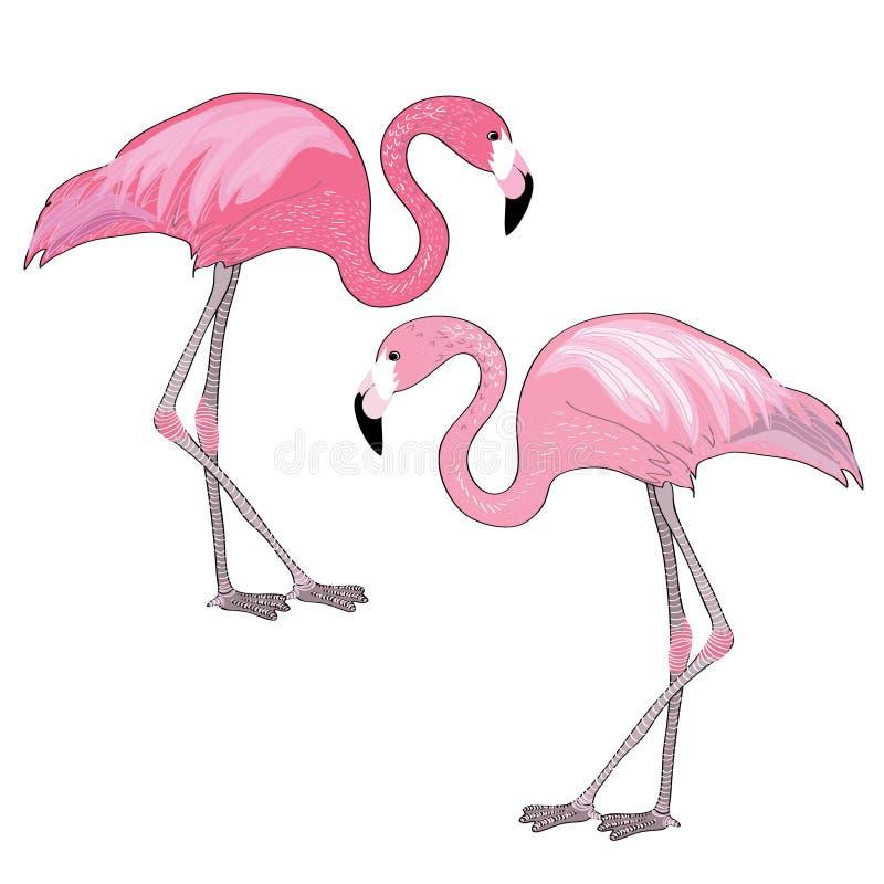 фламингоы 2 Иллюстрация вектора пар фламинго Белая предпосылка бесплатная иллюстрация