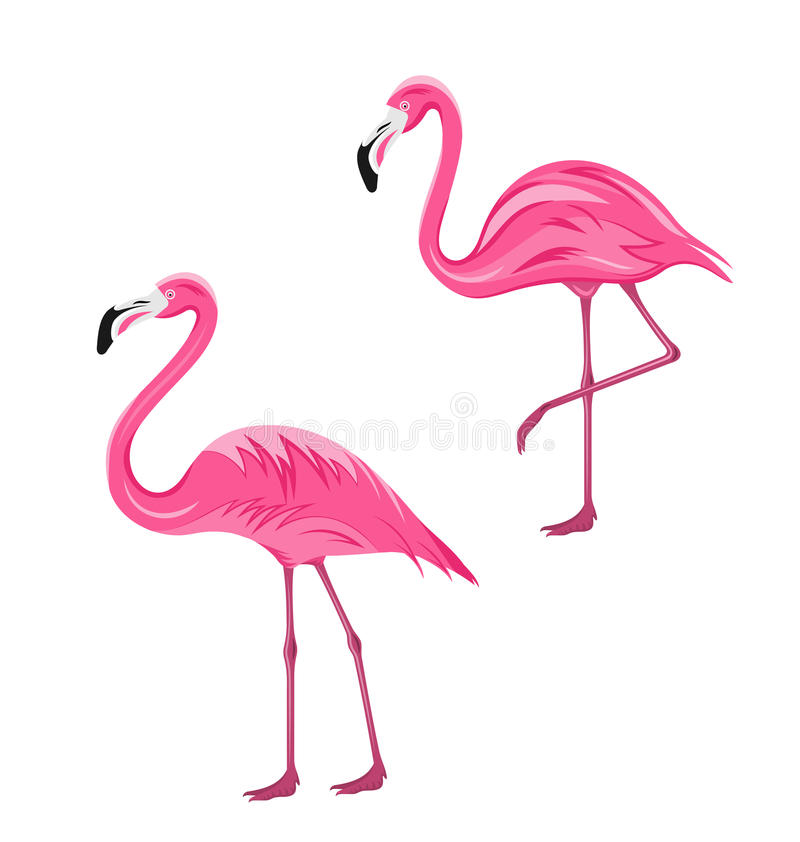 Фламинго пар розовые изолированные на белой предпосылке бесплатная иллюстрация