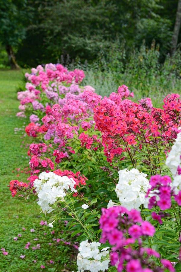 Download Флокс сада стоковое изображение. изображение насчитывающей садовничать - 33739665