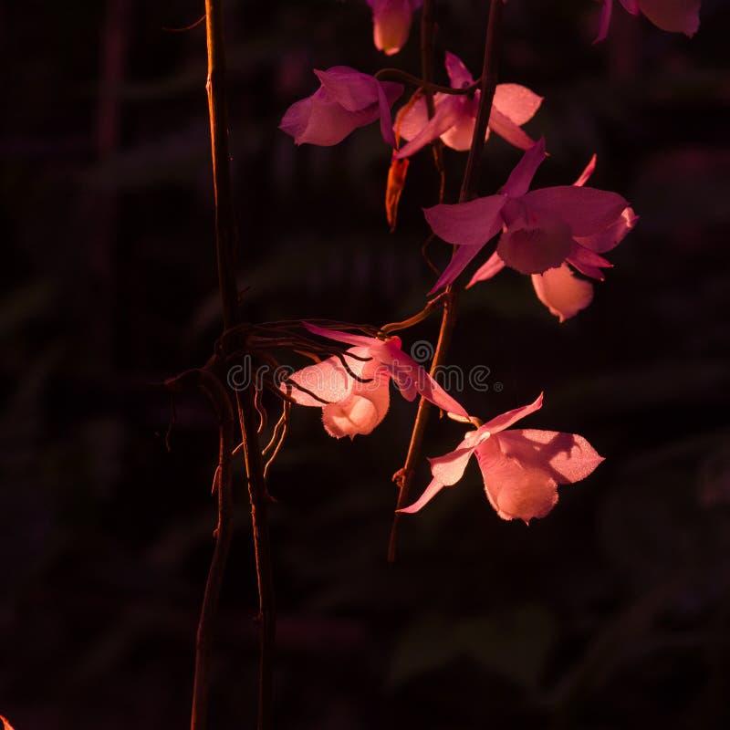 Флора лета стоковое фото rf