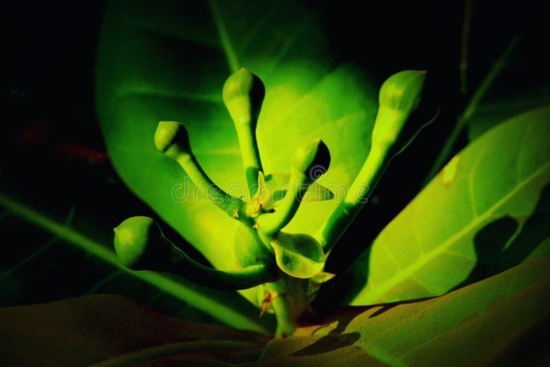 Флора и фауна стоковое фото rf