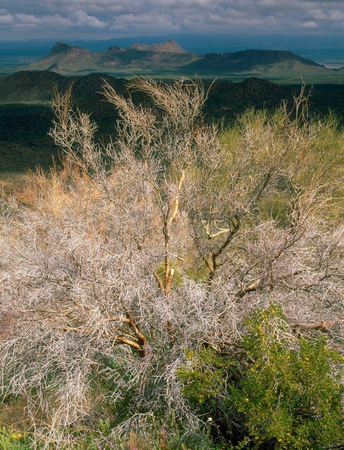 Флора на следе Hugh Norris, национальный парк Saguaro, Аризона стоковые фото