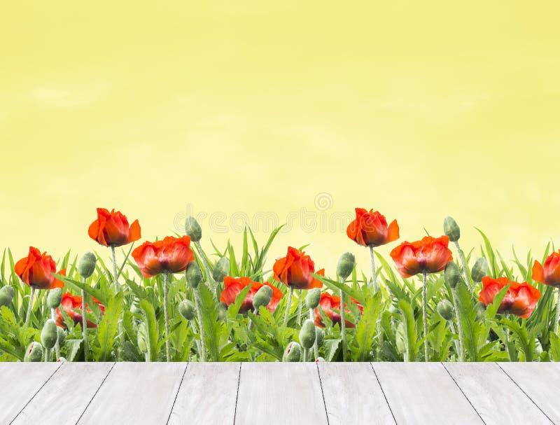 Флористическая граница красных маков в белых деревянных террасах, предпосылка природы стоковое фото rf