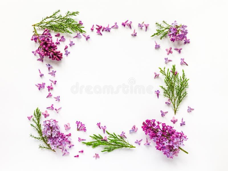 Флористическая граница свежих цветков сирени и хворостин можжевельника на белизне стоковые фото
