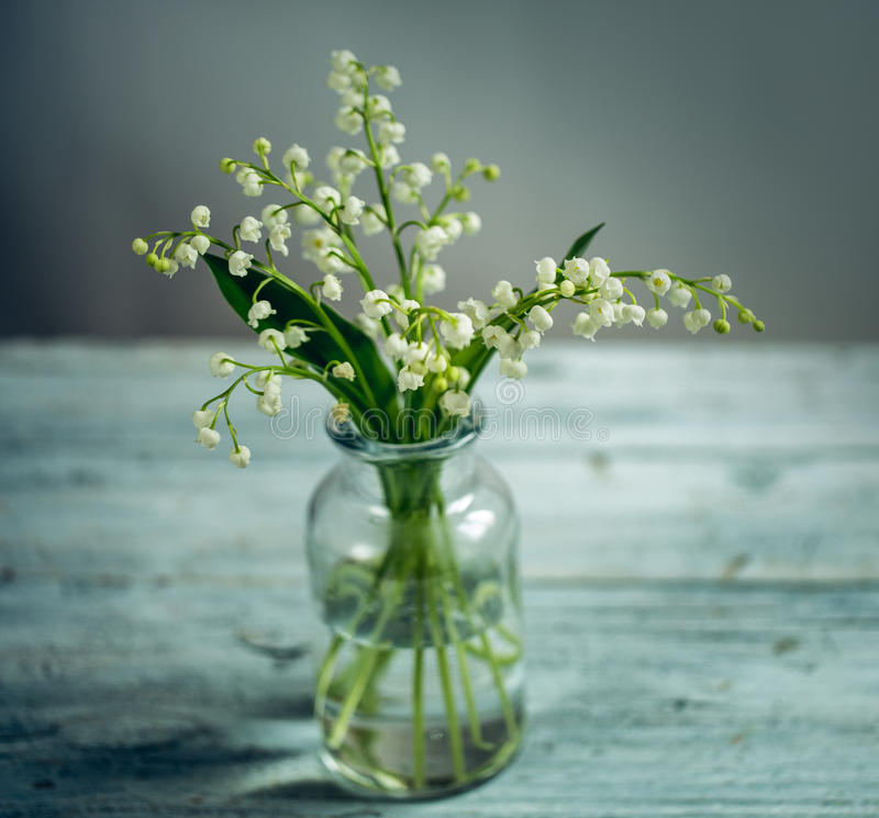 флористическая жизнь все еще стоковое изображение