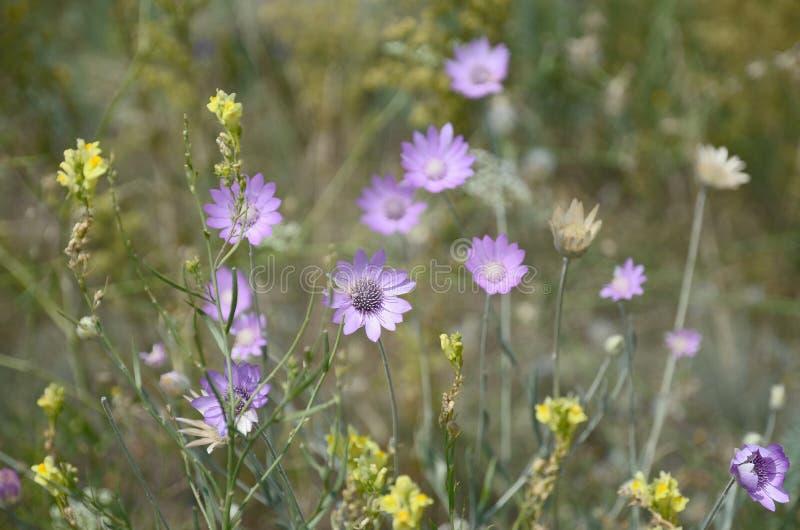 Флористическая предпосылка желтых и фиолетовых цветков стоковые фотографии rf