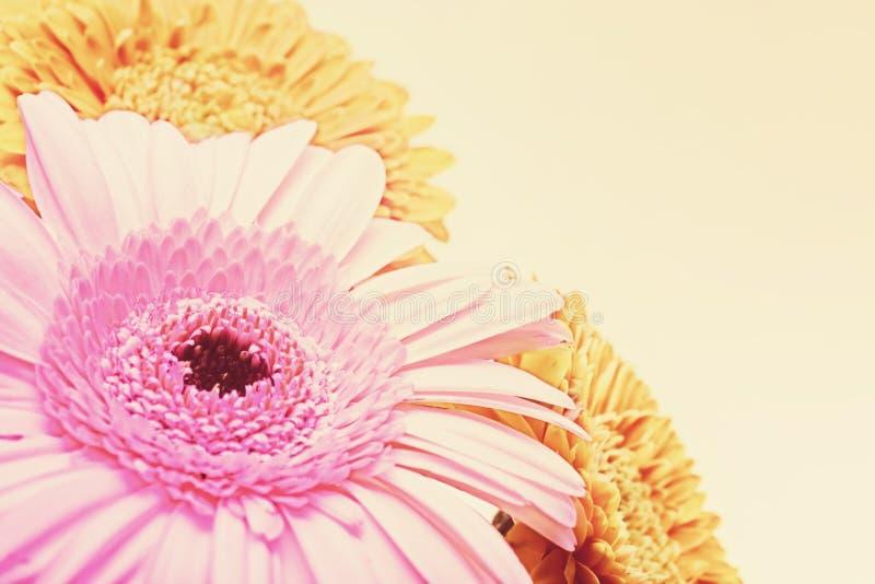 Флористическая предпосылка с gerberas стоковые изображения rf