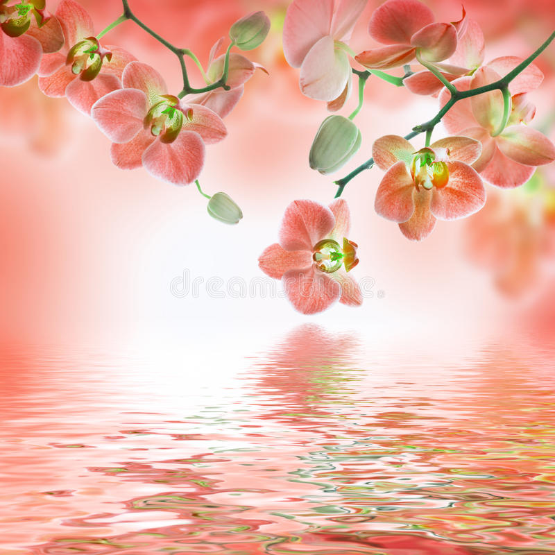 Флористическая предпосылка тропического иллюстрация штока