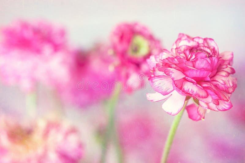 Флористическая предпосылка. стоковые фото