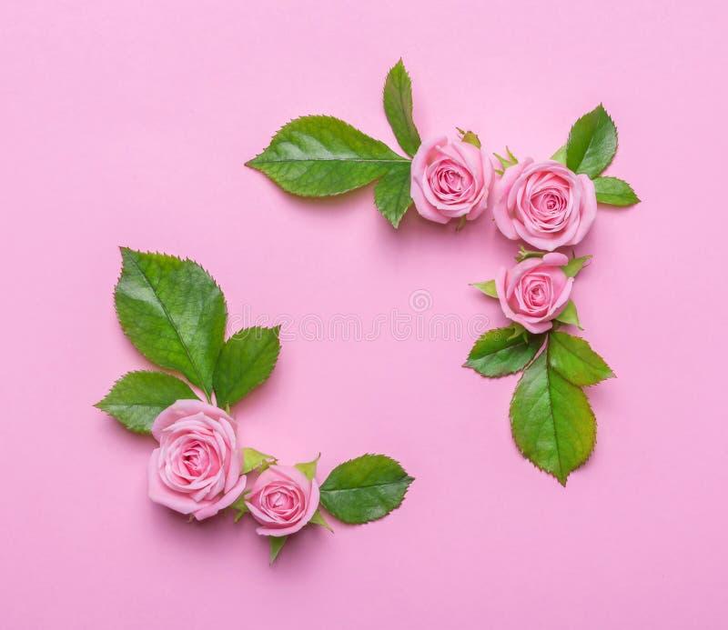 Флористическая рамка с розовыми розами на розовой предпосылке Загоняет границы в угол цветков стоковые фото