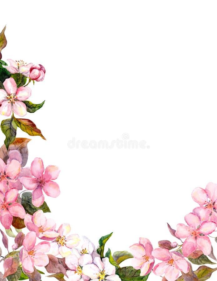 Флористическая ретро предпосылка с цветением Белые, розовые цветки яблока Винтажный watercolour иллюстрация вектора