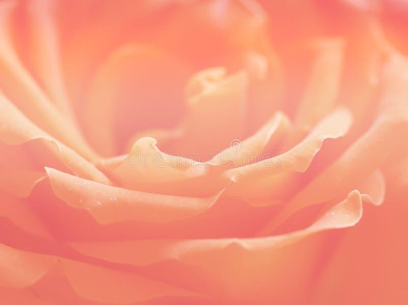 Флористическая розовая природа лета валентинки органов предпосылки стоковое изображение