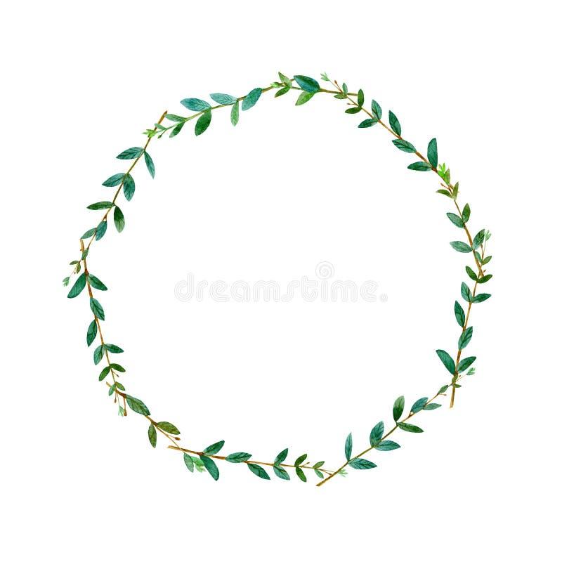 Флористический венок Гирлянда евкалипта разветвляет Рамка травы иллюстрация вектора
